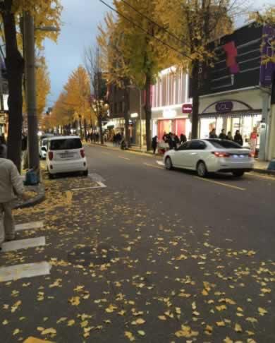 韩国首尔新沙洞林荫路,首尔林荫路大概是逃离闹市的购物好去处