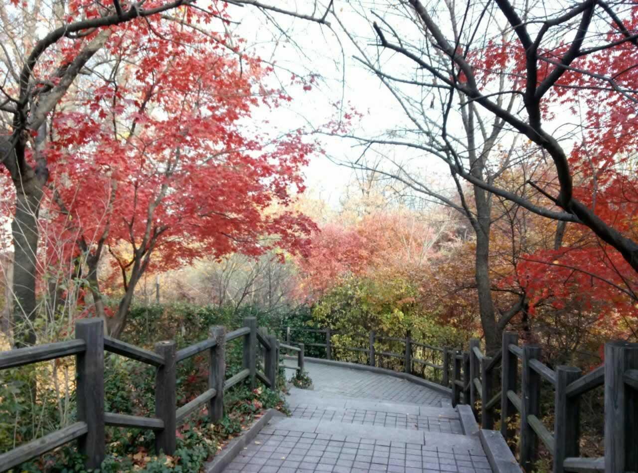 首尔整形恢复、自由行必去景点南山公园。