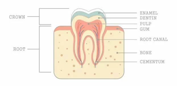 冷光美白需要多次牙齿才能彻底变白?
