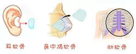 九区分段打造原生态美鼻